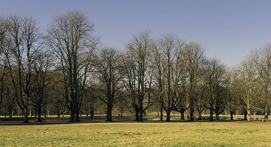 Wiese und Bäume entlang des Kanals am Fort VI
