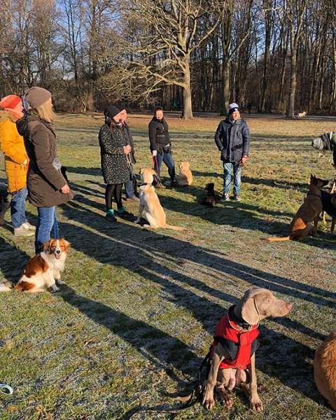 Gruppenstunde Hundeschule Unitas