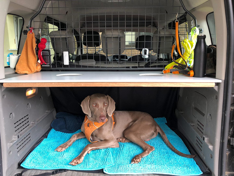 Hund im Kofferraum unter Laderaumabdeckung